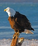 2 EAGLE.jpg