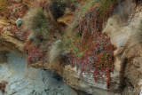 Coastal Cliff Face Flora