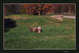 Thumper along the Warburton Trail