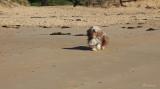 Thumper on the beach