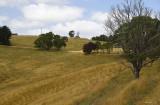 Korumburra Countryside