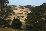 Strzelecki Hills