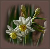 Time for Jonquils