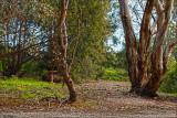 Pathway to the round-yard
