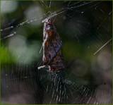 Leaf Spider 2