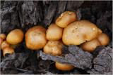 Fungi at the base of a tree