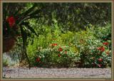 Epiphyllum and the rose called Mainau Feuer