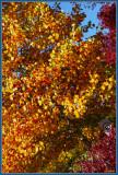 Tilting leaves