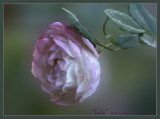Unusual and Unknown ROSES 2015-16