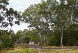 Belair National Park, South Australia.