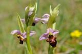 Orchidées 2016