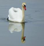 Swan P1000449