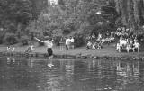 SCS Regatta - falling into the Lynn River