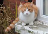 60:365attention seeking feline