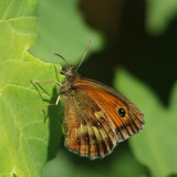 189:365 butterfly not fluttering