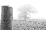 295:365november's foggy welcome