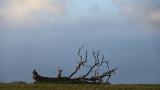 305:365fallen tree revisited