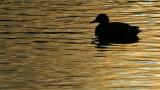 316:365on golden pond
