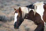 2014-11-05 D810 horses_0134.jpg