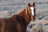 2014-11-05 D810 horses_0155.jpg