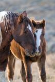 2014-11-05 D810 horses_0172.jpg