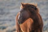2014-11-05 D810 horses_0183.jpg