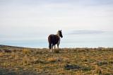 2014-11-05 D810 horses_0198.jpg