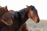 2014-11-05 D810 horses_0203.jpg