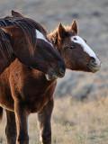 2014-11-05 D810 horses_0174.jpg