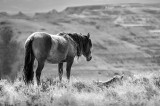 2015-03-21 horses_0469 copy blue filter.jpg