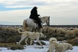 2014-12-12 sheep dogs_0306 ..jpg