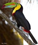 gamboa_panama_wildlife