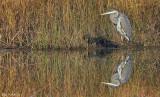 les_oiseaux_de_rivage