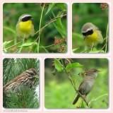 Some birds of the Fletcher Wildlife Garden