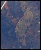 Leech, probably Macrobdella decora