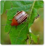 Beetles (Order: Coleoptera) of the Reveler Conservation Area