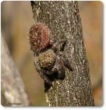 Spiders and Mites (Arachnida) of the Reveler Conservation Area
