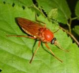 Flies (Order: Diptera) of the Reveler Conservation Area