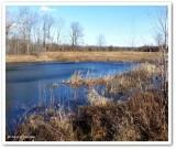 The pond, Christmas Eve