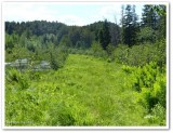 Larose Forest  BioBlitz