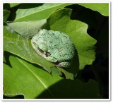 Reptiles and Amphibians of the Reveler Conservation Area