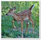 Mammals of the Reveler Conservation Area
