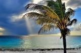 Palm Tree and Divine Light