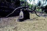 The Sugar Cane Mill