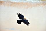 Indian House Crow Landing