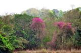 Goa The Beautiful