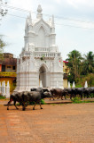 Indo-Portuguese Monument, With Herd Of Buffalo