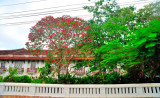 Mansion With The Red Tree