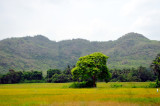Unspoiled Fields and Hills