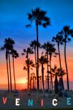 Venice Sunset Palms